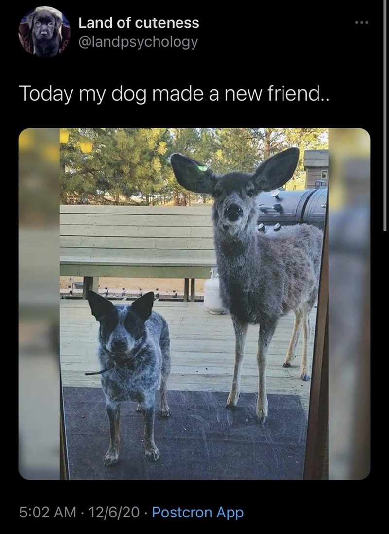 funny tweet with a pic of a dog and a deer | Land of cuteness , @landpsychology Today my dog made a new friend..