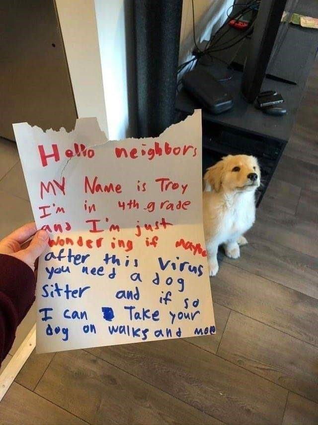 adorable puppy dog and a chewed up sign | hello neighbors my name is troy i'm in fourth grade and i'm just wondering if after this virus you need a dog sitter and if so i can take your dogs on walks