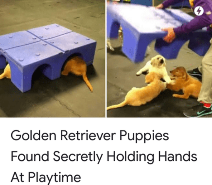 Golden Retriever Puppies Found Secretly Holding Hands At Play time | pic of a person lifting a box to reveal three cute puppy dogs putting their paws together