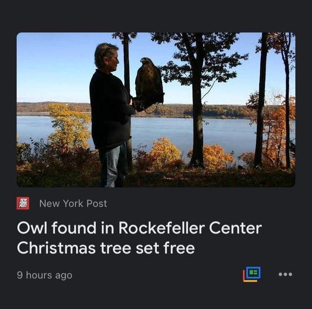 Natural landscape - New York Post POST Owl found in Rockefeller Center Christmas tree set free 9 hours ago