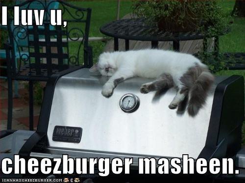 Cheezburger Image 957830912
