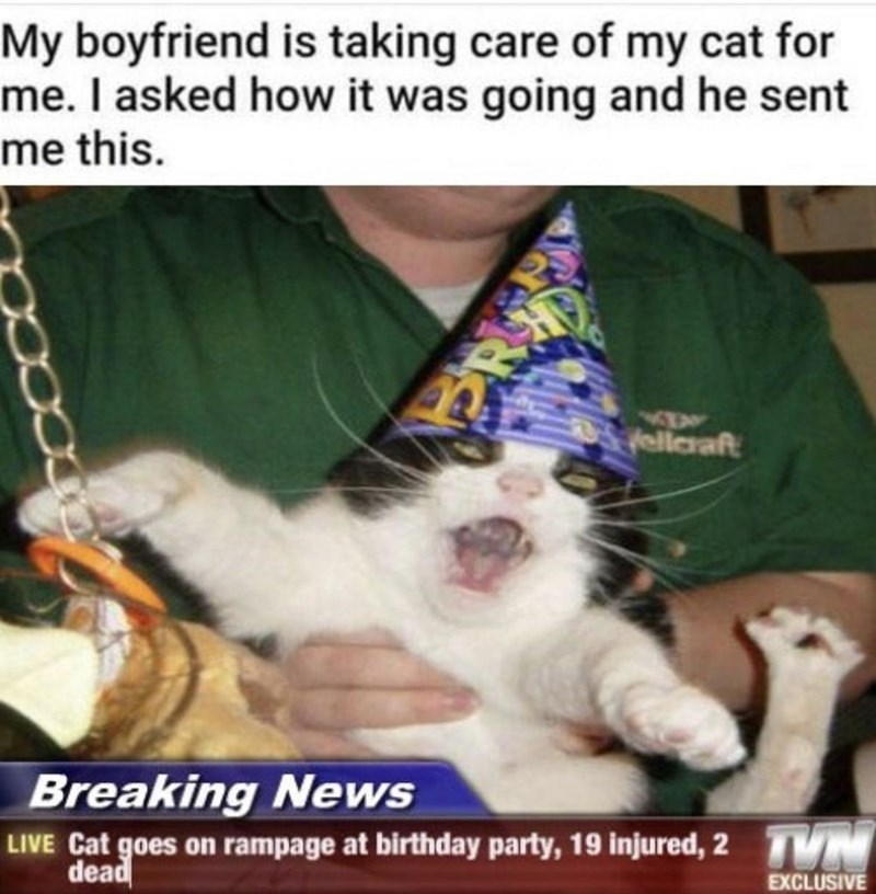 Vertebrate - My boyfriend is taking care of my cat for me. I asked how it was going and he sent me this. ellaraft Breaking News LIVE Cat goes on rampage at birthday party, 19 injured, 2 TVM dead EXCLUSIVE