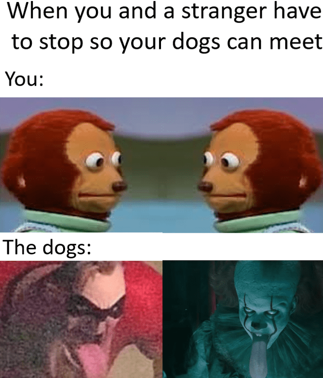 Organism - When you and a stranger have to stop so your dogs can meet You: The dogs: