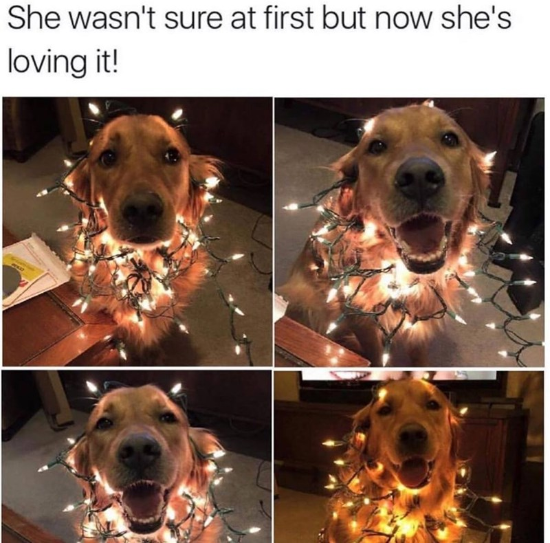 She wasn't sure at first but now she is loving it! cute dog wrapped up in christmas fairy lights