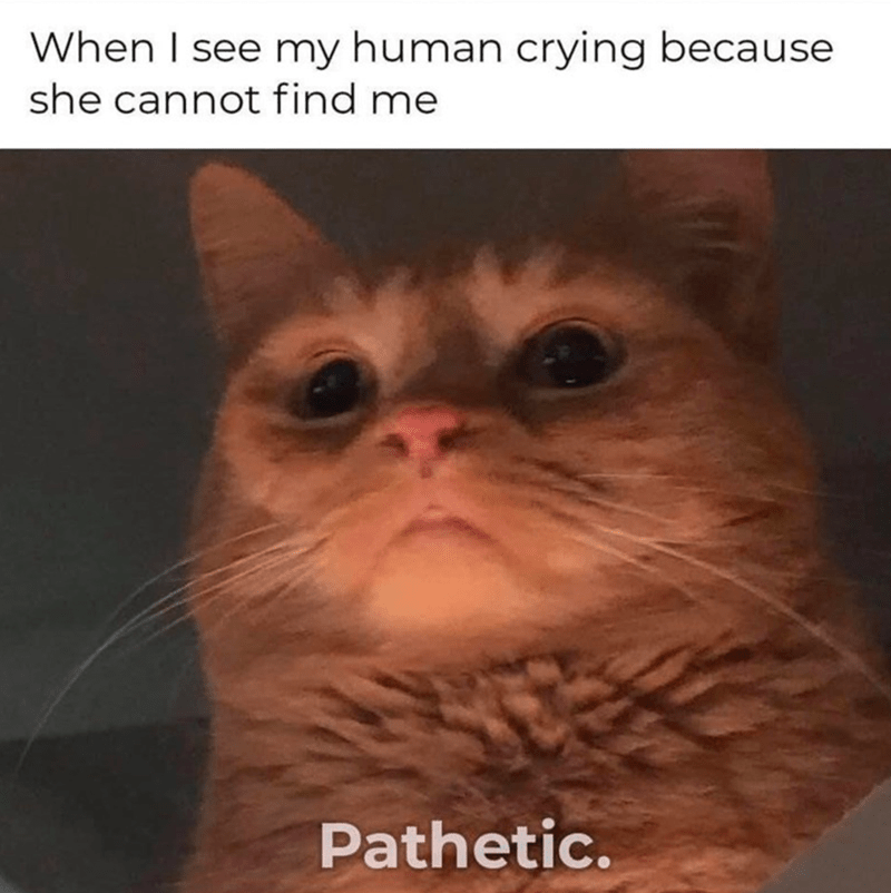 funny memes, memes, cat memes | When I see my human crying because she cannot find me Pathetic. cat looking down condescendingly