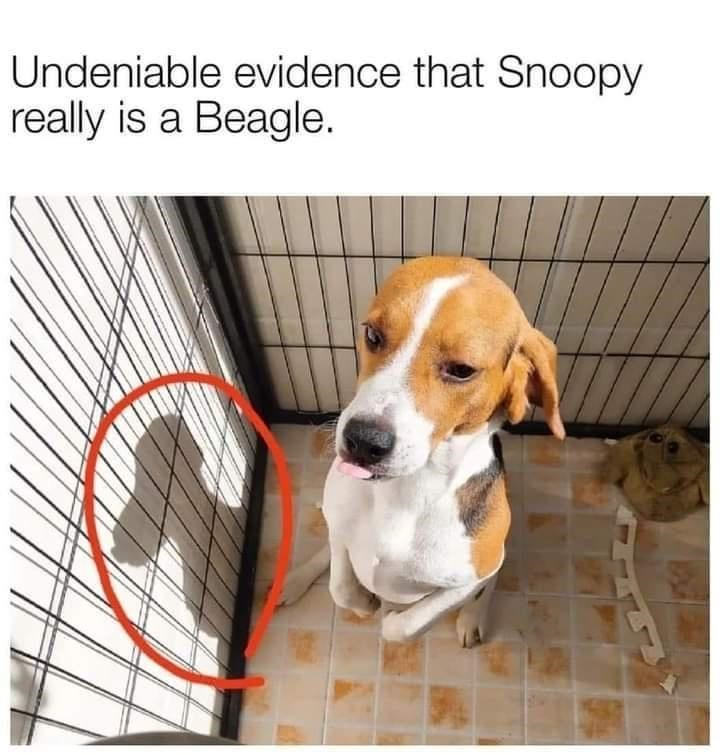 Undeniable evidence that Snoopy really is a Beagle. cute pic of a small dog standing on its hind legs and the shadow its casting looks like Snoopy