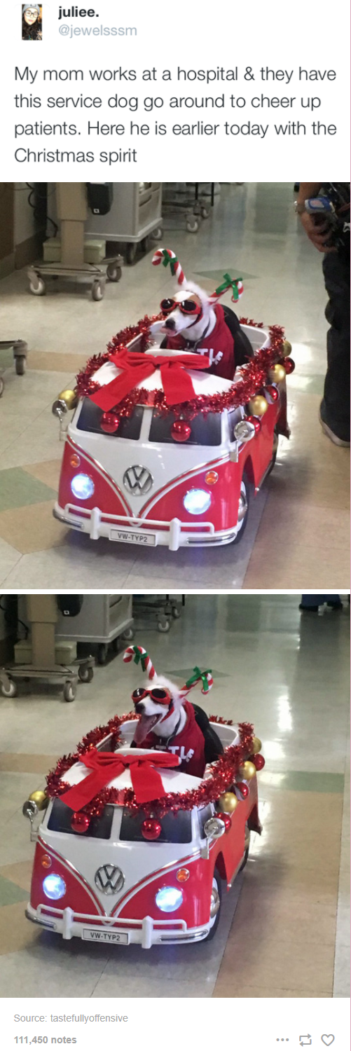 Mode of transport - juliee. @jewelsssm My mom works at a hospital & they have this service dog go around to cheer up patients. Here he is earlier today with the Christmas spirit VW-TYP2 VW-TYP2 Source: tastefullyoffensive 111,450 notes