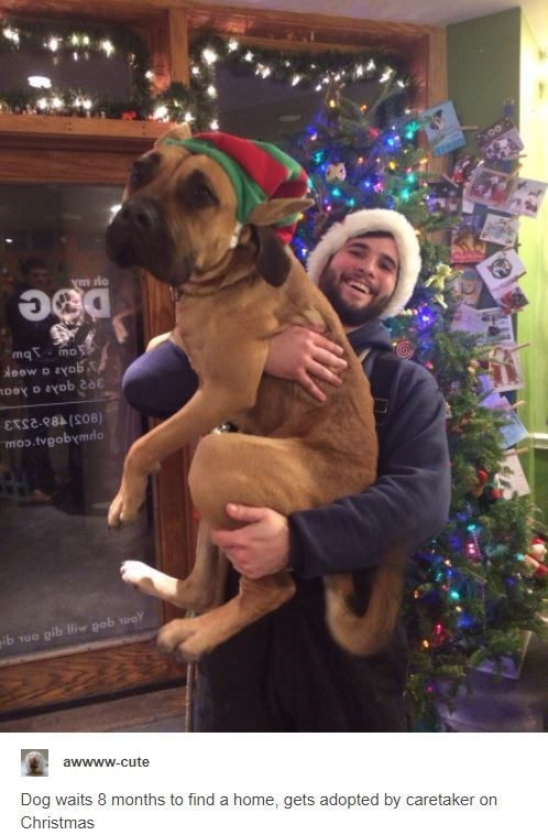 Dog breed - ym do mqT- mo doow D zyob ETS2-P8A (SO8) opwaqodar'cow ib vuo pib liw pob tuoY awwww-cute Dog waits 8 months to find a home, gets adopted by caretaker on Christmas