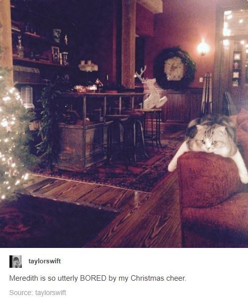 Lighting - taylorswift Meredith is so utterly BORED by my Christmas cheer. Source: taylorswift