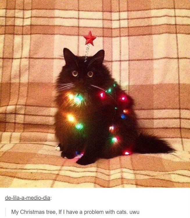 Small to medium-sized cats - de-lila-a-medio-dia: My Christmas tree, If I have a problem with cats. uwu