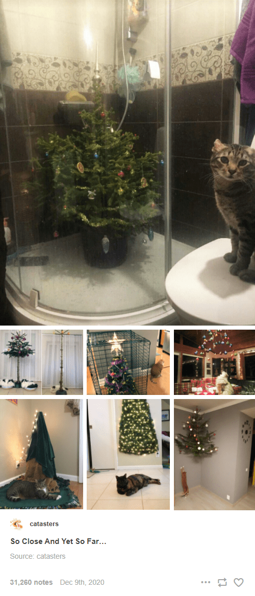Interior design - catasters So Close And Yet So Far... Source: catasters 31,260 notes Dec 9th, 2020