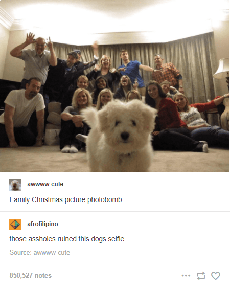 Human - awwww-cute Family Christmas picture photobomb afrofilipino those assholes ruined this dogs selfie Source: awwww-cute 850,527 notes ...