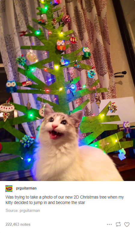 Carnivore - prguitarman Was trying to take a photo of our new 2D Christmas tree when my kitty decided to jump in and become the star Source: prguitarman 222,463 notes ...