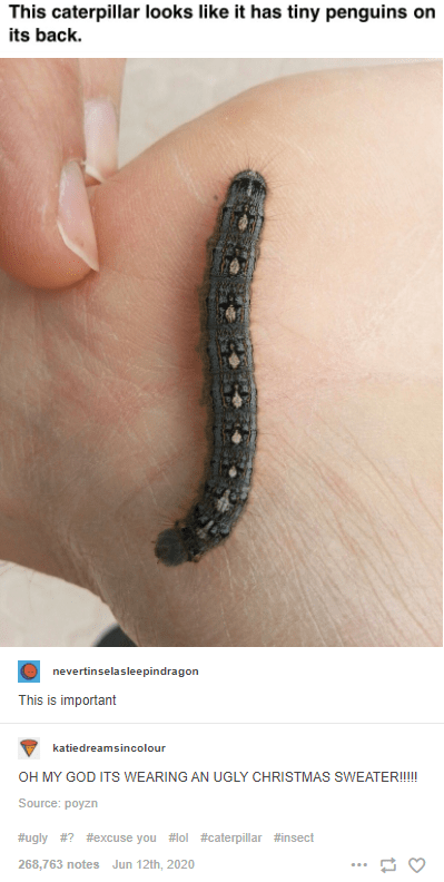 Finger - This caterpillar looks like it has tiny penguins on its back. nevertinselasleepindragon This is important katiedreamsincolour OH MY GOD ITS WEARING AN UGLY CHRISTMAS SWEATER!!! Source: poyzn #ugly #? #excuse you #lol #caterpillar #insect 268,763 notes Jun 12th, 2020 ...