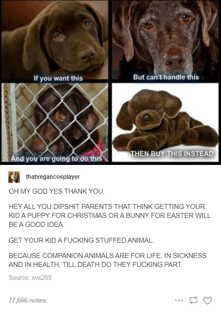 Brown - If you want this But can't handle this THEN BUY THIS INSTEAD And you are going to do this thatvegancosplayer OH MY GOD YES THANK YOU. HEY ALL YOU DIPSHIT PARENTS THAT THINK GETTING YOUR KIDA PUPPY FOR CHRISTMAS OR A BUNNY FOR EASTER WILL BE A GOOD IDEA. GET YOUR KID A FUCKING STUFFED ANIMAL. BECAUSE COMPANION ANIMALS ARE FOR LIFE, IN SICKNESS AND IN HEALTH, TILL DEATH DO THEY FUCKING PART. Source: xVx269 77,666 notes ...
