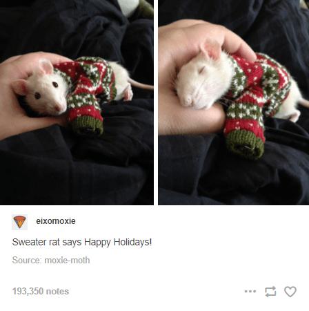 Organism - eixomoxie Sweater rat says Happy Holidays! Source: moxie-moth 193,350 notes