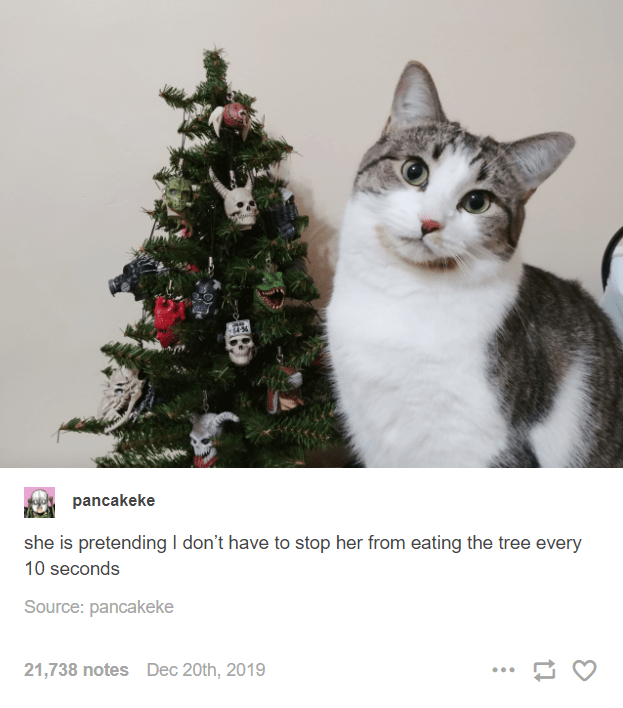 Christmas tree - pancakeke she is pretending I don't have to stop her from eating the tree every 10 seconds Source: pancakeke 21,738 notes Dec 20th, 2019 ...