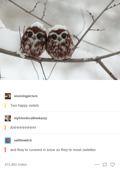 Branch - stunningpicture Two happy owlets myfriendscallmekazzy   АНННННННН salithewitch  and they're covered in snow so they're moist owlettes 473,953 notes ...