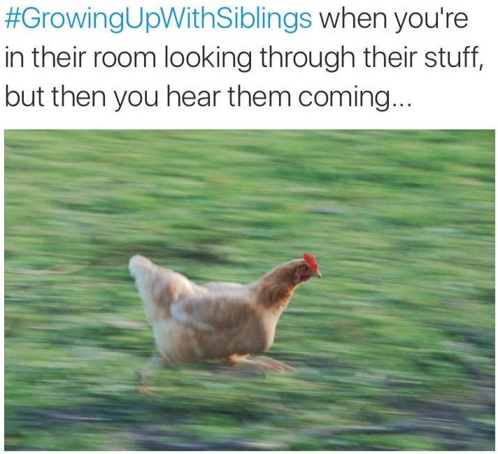 #GrowingUpWithSiblings when you're in their room looking through their stuff, but then you hear them coming.. | funny pic of a chicken running fast