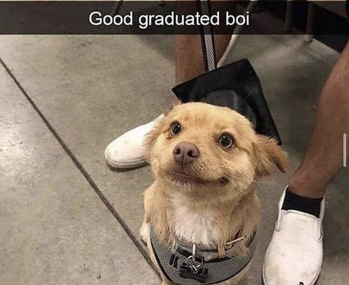 Good graduated boi | cute dog wearing a harness looking up and smiling