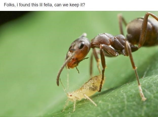 Folks, i found this lil fella, can we keep it? | bit ant standing above a tiny bug
