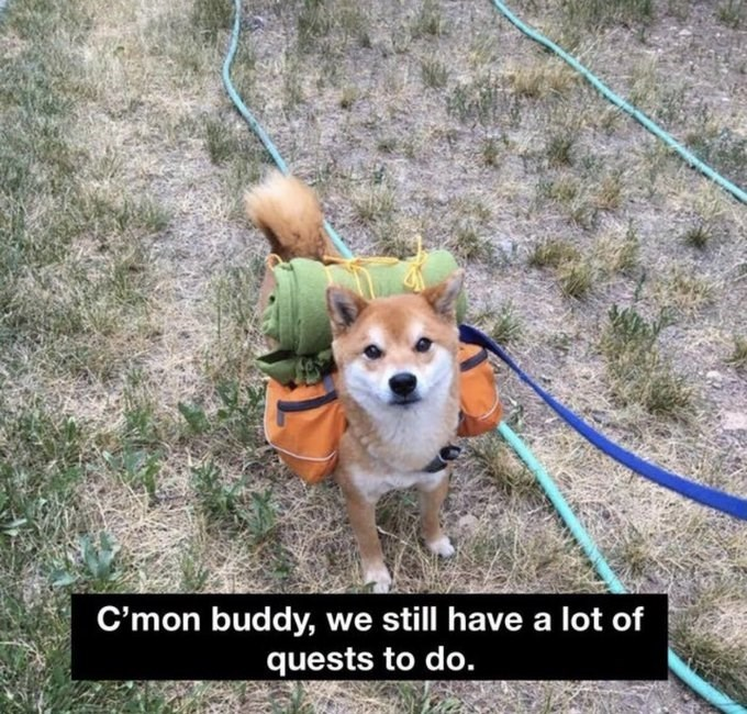 C'mon buddy, we still have a lot of quests to do. adorable shiba inu dog with a backpack strapped to its back