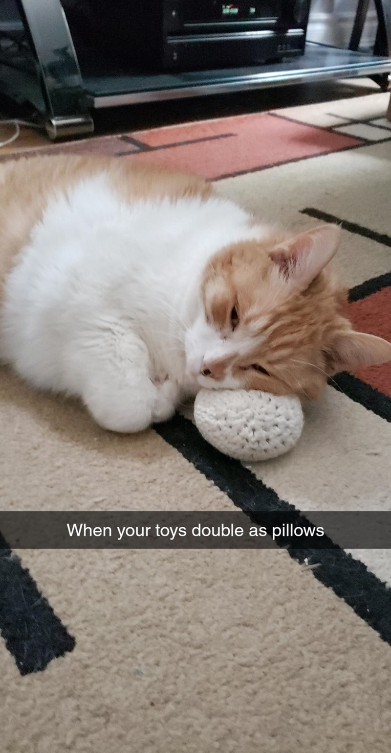 Felidae - When your toys double as pillows