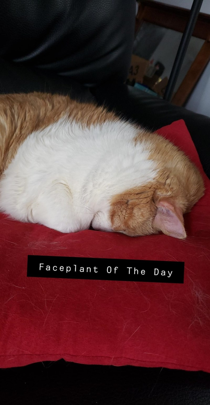 Comfort - Faceplant Of The Day