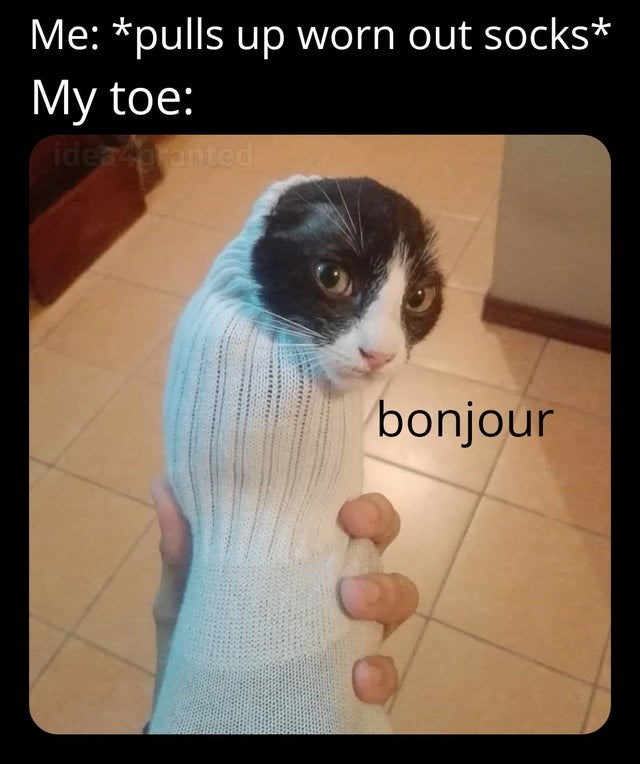 Skin - Me: *pulls up worn out socks* My toe: idearanted bonjour