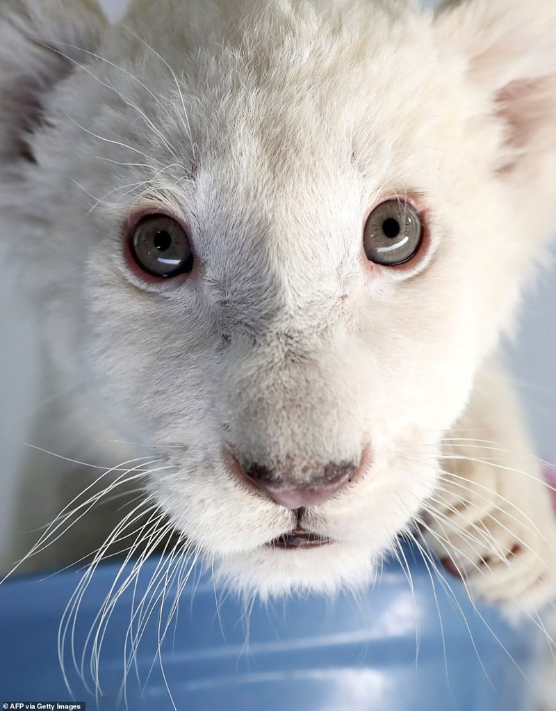 Whiskers - © AFP via Getty Images