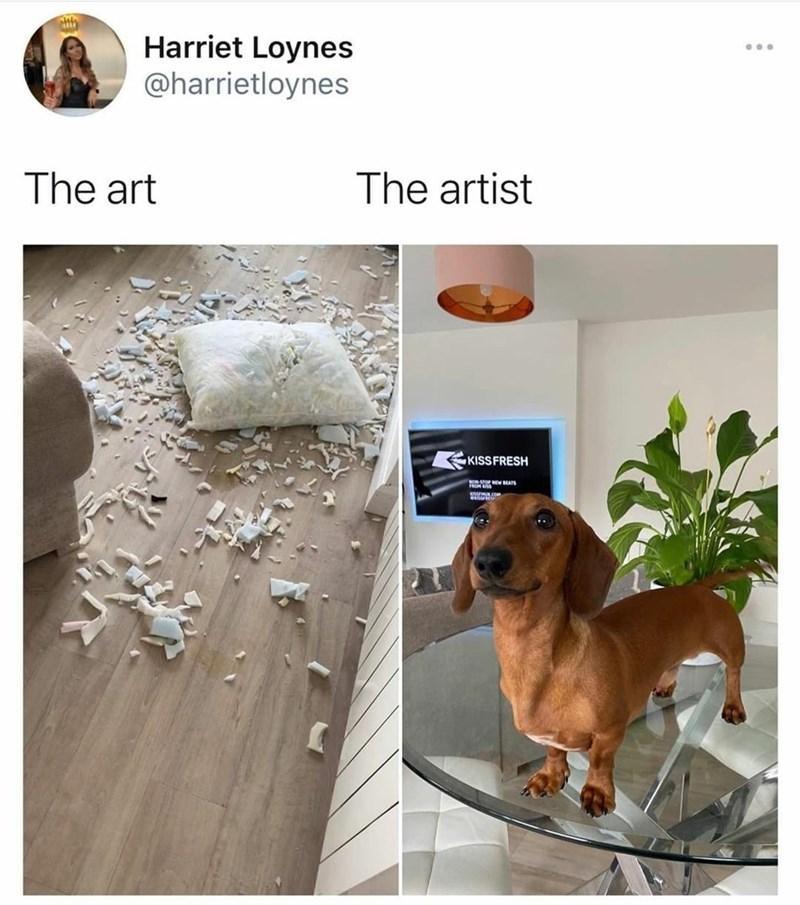 Dog breed - Harriet Loynes @harrietloynes ... The art The artist KISSFRESH