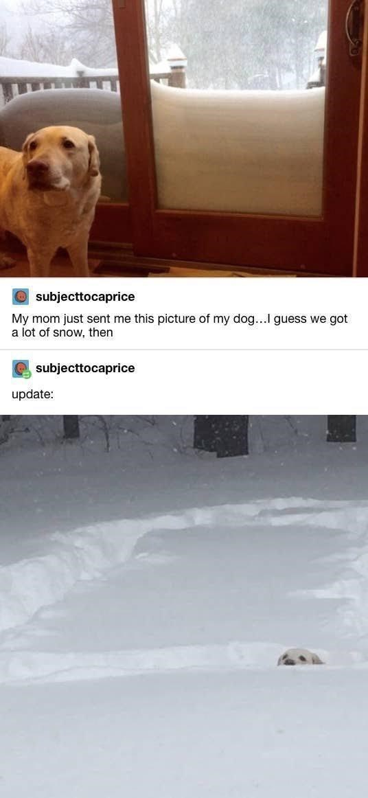 Dog breed - Osubjecttocaprice My mom just sent me this picture of my dog...I guess we got a lot of snow, then subjecttocaprice update: