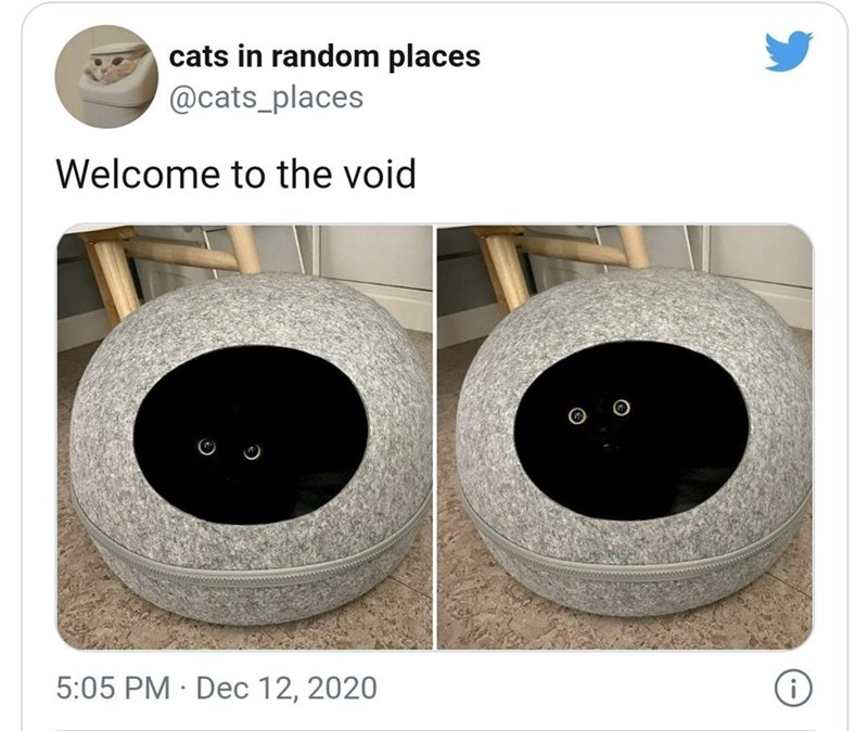 Toilet - cats in random places @cats_places Welcome to the void 5:05 PM · Dec 12, 2020