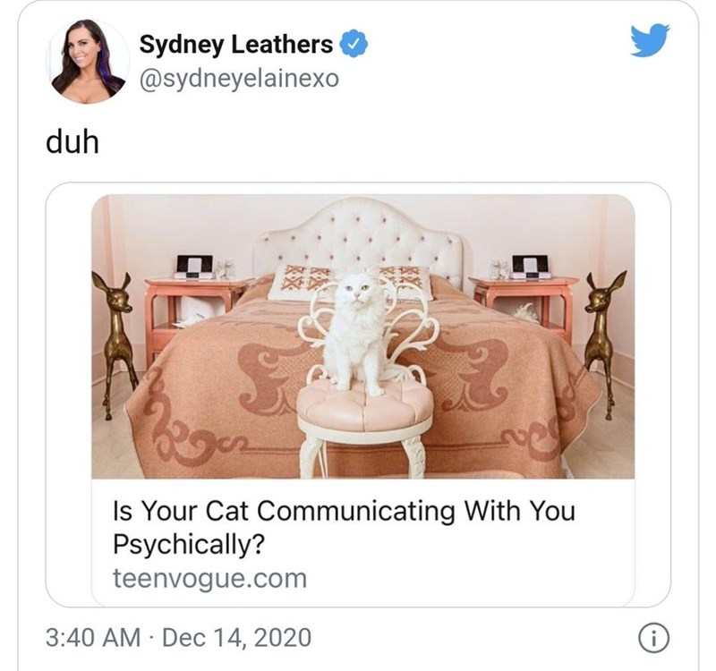 Product - Sydney Leathers O @sydneyelainexo duh Is Your Cat Communicating With You Psychically? teenvogue.com 3:40 AM · Dec 14, 2020