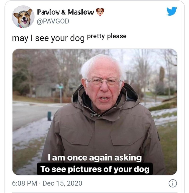 Glasses - Pavlov & Maslow @PAVGOD may I see your dog pretty please Iam once again asking To see pictures of your dog 6:08 PM · Dec 15, 2020