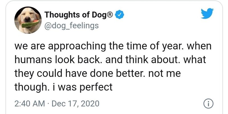 Text - Thoughts of Dog® @dog_feelings we are approaching the time of year. when humans look back. and think about. what they could have done better. not me though. i was perfect 2:40 AM · Dec 17, 2020