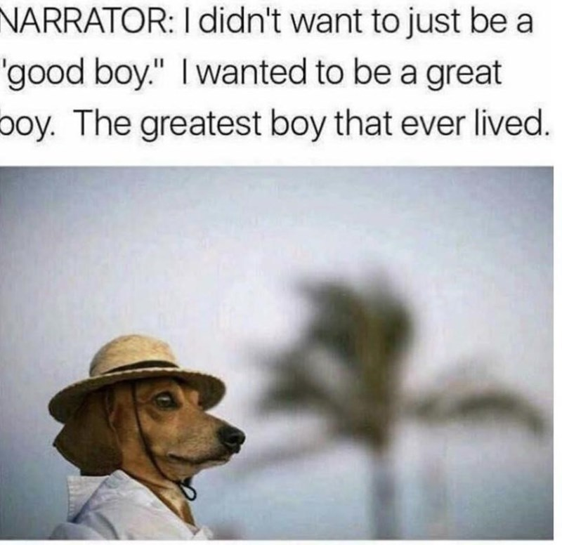 """Dog breed - NARRATOR: I didn't want to just be a 'good boy."""" Iwanted to be a great poy. The greatest boy that ever lived."""