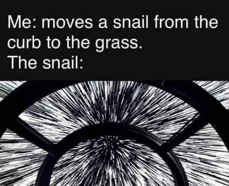 Text - Me: moves a snail from the curb to the grass. The snail: