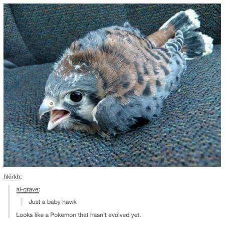 Skin - hkirkh: al-grave: | Just a baby hawk Looks like a Pokemon that hasn't evolved yet.