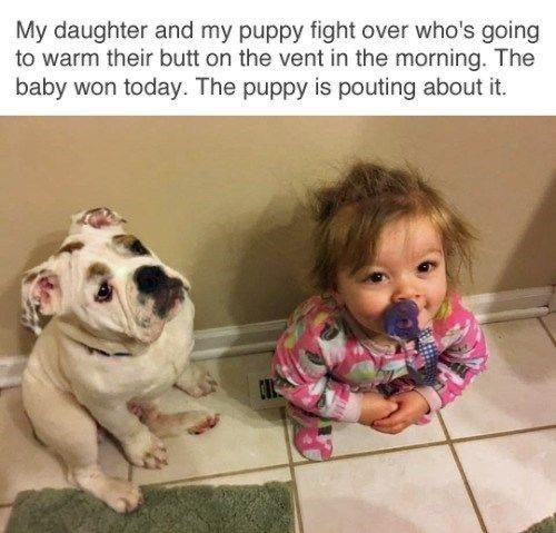 Human - My daughter and my puppy fight over who's going to warm their butt on the vent in the morning. The baby won today. The puppy is pouting about it.