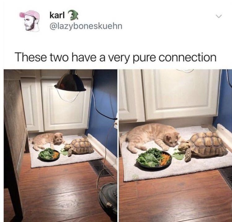 Carnivore - karl 3 @lazyboneskuehn These two have a very pure connection