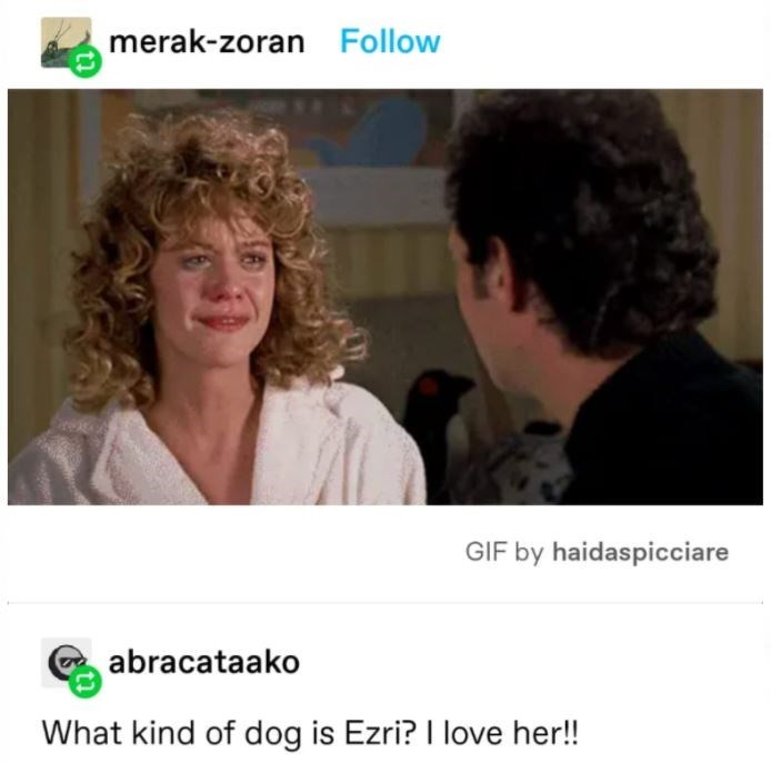 People - merak-zoran Follow GIF by haidaspicciare abracataako What kind of dog is Ezri? I love her!!