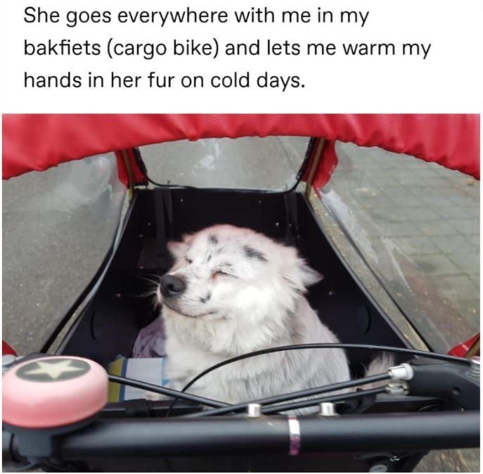 Dog breed - She goes everywhere with me bakfiets (cargo bike) and lets me warm my my hands in her fur on cold days.