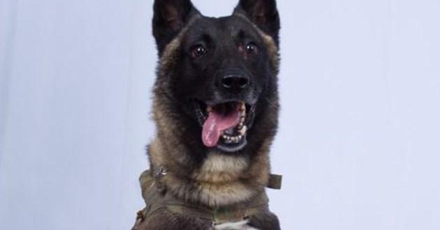 hero dog military isis