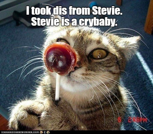 Lolcats - Page 172 - LOL at Funny Cat Memes - Funny cat pictures with words  on them - lol   cat memes   funny cats   funny cat pictures with words