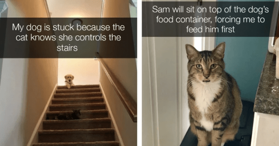 dogs funny cats cats are assholes Cats - 9583365