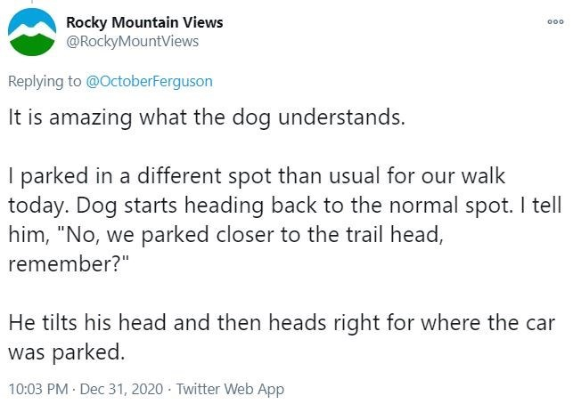 """Text - Rocky Mountain Views @RockyMountViews 000 Replying to @OctoberFerguson It is amazing what the dog understands. I parked in a different spot than usual for our walk today. Dog starts heading back to the normal spot. I tell him, """"No, we parked closer to the trail head, remember?"""" He tilts his head and then heads right for where the car was parked. 10:03 PM · Dec 31, 2020 · Twitter Web App"""