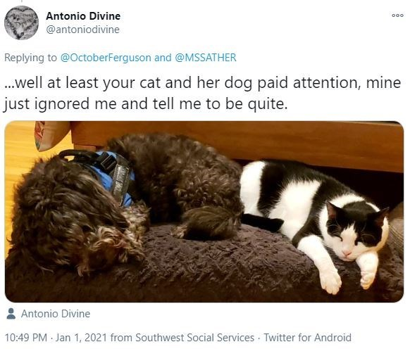 Vertebrate - Antonio Divine 000 @antoniodivine Replying to @OctoberFerguson and @MSSATHER .well at least your cat and her dog paid attention, mine just ignored me and tell me to be quite. Antonio Divine 10:49 PM Jan 1, 2021 from Southwest Social Services Twitter for Android
