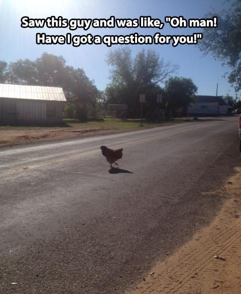 Saw this guy and was like, oh man! Have I got a question for you!' | chicken crossing the road