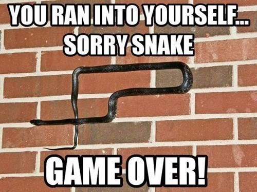 you ran into yourself sorry snake game over | snake crawling on a brick wall